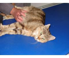 Bura , przytulaśna koteczka, szuka swojego człowieka.