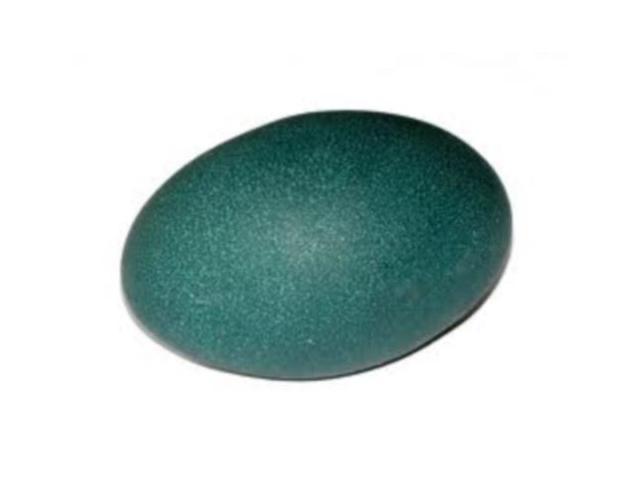 Jajko Lęgowe Strusia Emu