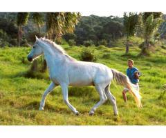 Sprzedam konia