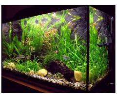 Kompletne akwarium