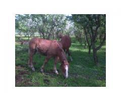 Likwidacja hodowli koni