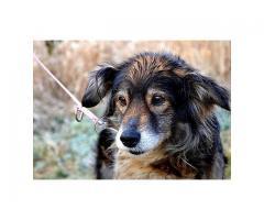 Pusia,urocza psia dama,potrzebuje nowego domku.
