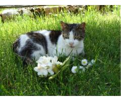 Okaż serce – adoptuj kotkę seniorkę !