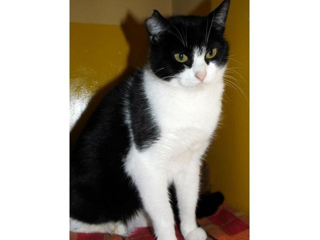 Bardzo spokojna, przyjazna kotka Kara czeka na dom