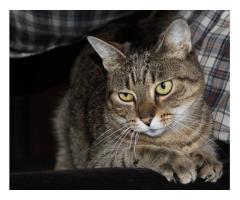 Kot do adopcji. Młoda, wysterylizowana.