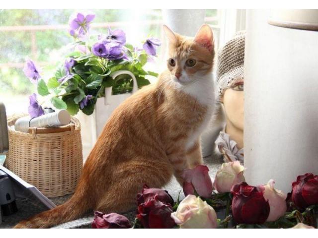 Piękna, młoda, gadająca kotka. Szuka człowieka do kochania.