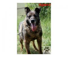 Agent pies, który kocha całym psim serduchem i bardzo chce być kochany