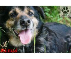 Kto pokocha starsze psie serducho naszego Witusia?