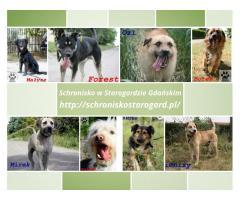 Czy warto adoptować psa ze schroniska?