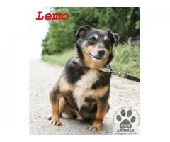 Malutki, kontaktowy psiak Lemo