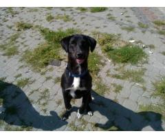 Laki - niespełna roczny psiak szuka domu