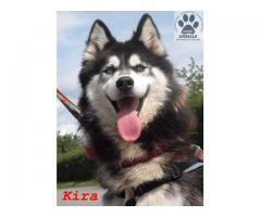 Kira przepiękna, żywiołowa, kochana sunia