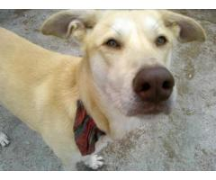 Fifi - młody psiak lubiący ruch i zabawę