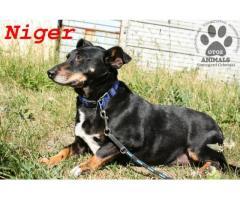 Spokojny, nieśmiały pies Niger czeka na uśmiech losu