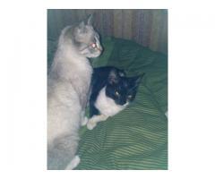 Dwie cudowne kotki do adopcji, ale tylko razem.
