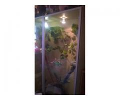 terrarium z oswojonym legwanem