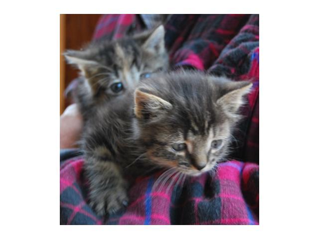 Mela i Dyzia, kocie rodzeństwo szuka domu!