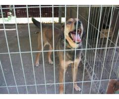 Chudek - ok 2-letni psiak szuka domu.