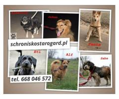 Nowe psiaki w schronisku szukają właścicieli