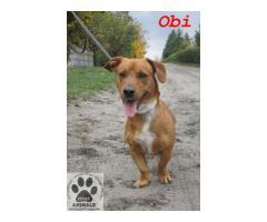 Wspaniały, bardzo oddany psiak Obi