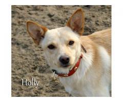 Roczna Holly szuka domu