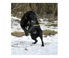 Cezar - bardzo żywy pies szuka domu