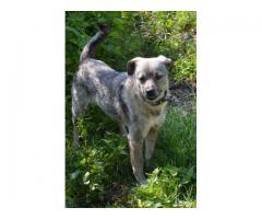 Lizak - wyjątkowy pies, o oryginalnej urodzie, szuka domu.