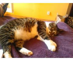 Czteroletnia kotka szuka domu