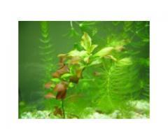 Rybki akwariowe i roślinki! Tanio