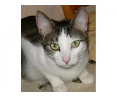 Dom ,dla młodego, sympatycznego kota, poszukiwany.